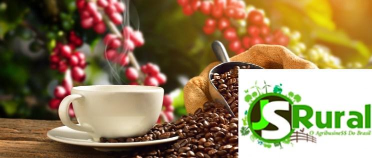 o-que-e-preciso-para-manter-uma-boa-plantacao-de-cafe