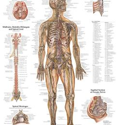anatomy [ 800 x 1056 Pixel ]