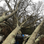 The community of Saks received some of the worst damage in Calhoun County during a severe weather event on Saturday, Jan. 11. Pictured above, several trees rest in the backyard of Hope Wingard in Saks. (Courtesy of Hope Wingard)