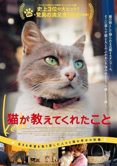 イスタンブールを舞台に、かわいい猫たちの映画がいよいよ日本上陸!