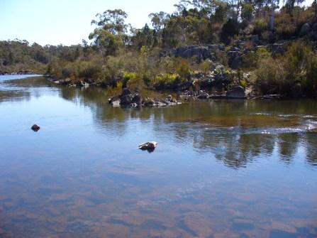 19-shoalhaven-river-bombay-reserve-p1010500