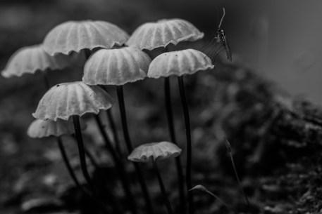 Happy Mushroom Family