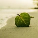 葉っぱ男の話 The story of leaf man