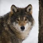 英語で人狼ゲームをしよう。 Let's play Werewolf game in English!