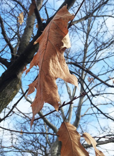 Leaves on a tree outside of Moore Hall hang on after surviving some harsh weather in the weeks before. Small signs of fall still show as Spring is coming up quickly.
