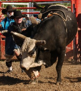 Editorial - Rodeo action.