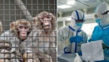 Corona Virus Medicine Experiment on monkeyies