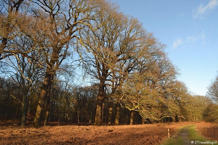 Bomen in de buurt van de Woestduin op Buitenplaats Leyduin in Vogelenzang