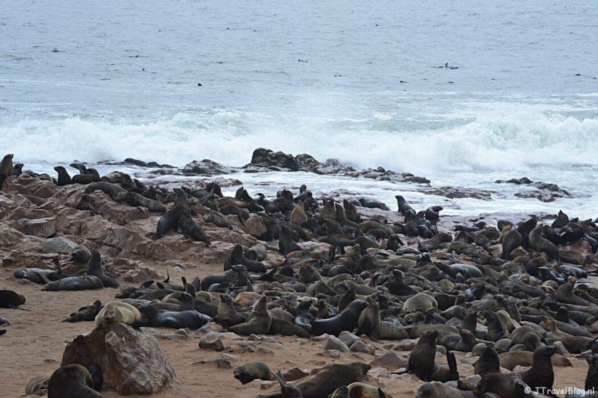 De zeehonden bij Cape Cross