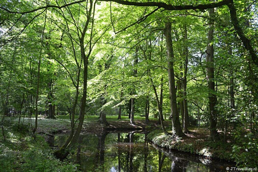De Zochervijver in de lente in Wandelbos Groenendaal in Heemstede
