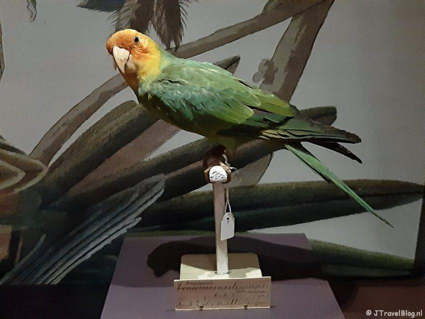 De tijdelijke tentoonstelling 'Vogelpracht' in het Teylers Museum in Haarlem
