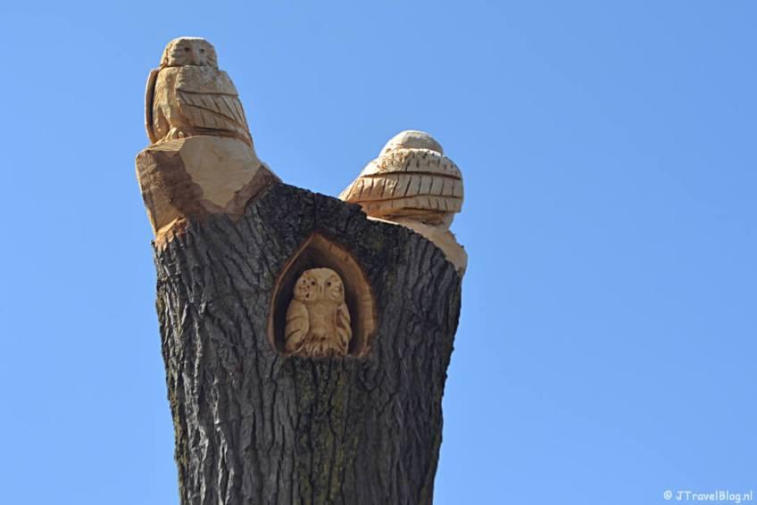 De uilen in het Haarlemmermeerse Bos in Hoofddorp tijdens de Trage Tocht Vijfhuizen