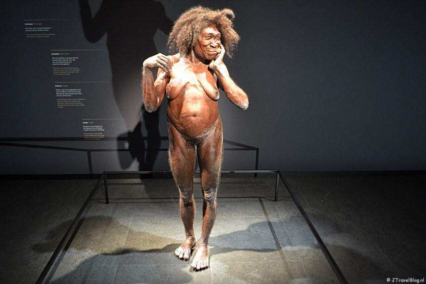De zaal 'Vroege mens' in Naturalis in Leiden