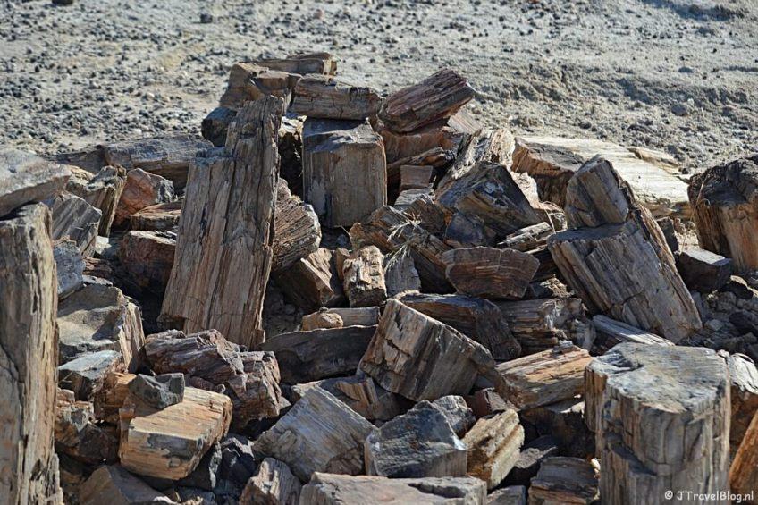 Een tegenvaller op reis: Petrified Forest in Namibië