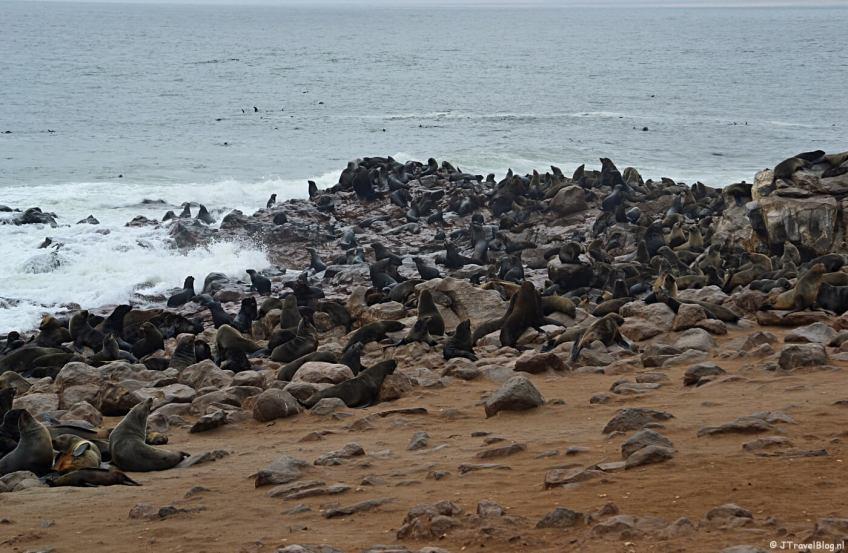 Bijzonder natuurfenomeen in Namibië: Cape Cross