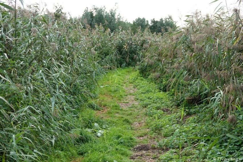 Een onverhard pad tijdens mijn wandeling van het Fortenpad van Wandelnetwerk Amstelland/Noord-Holland