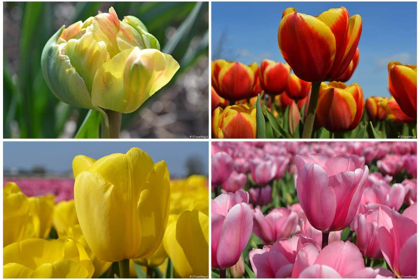 Originele foto's voor blog Review - Retroprints van Fotofabriek.nl