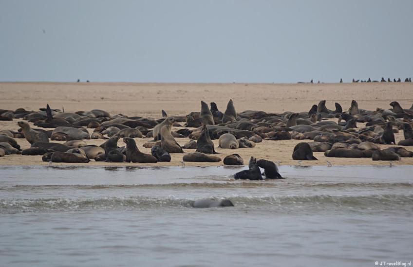 Zeehonden bij Pelican Point tijdens de boottocht bij Walvis Bay