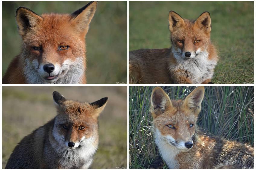 Collage van een paar originele foto's die gebruikt zijn in mijn Fotoboekje M van Smartphoto.nl