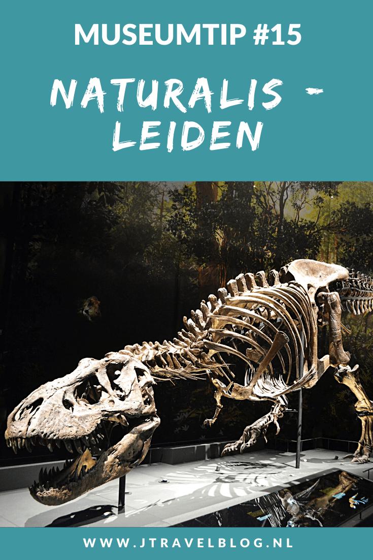 Deze museumtip gaat over Naturalis in Leiden. In Naturalis beleef je de wonderlijke wereld die natuur heet. Ga op ontdekkingstocht in zeven tentoonstellingszalen vol met het mooiste uit de natuur en ga op zoek naar T. rex Trix. Hier lees je meer over Naturalis in Leiden. Lees je mee? #naturalis #naturalisleiden #leiden #museum #museumkaart #jtravel #jtravelblog