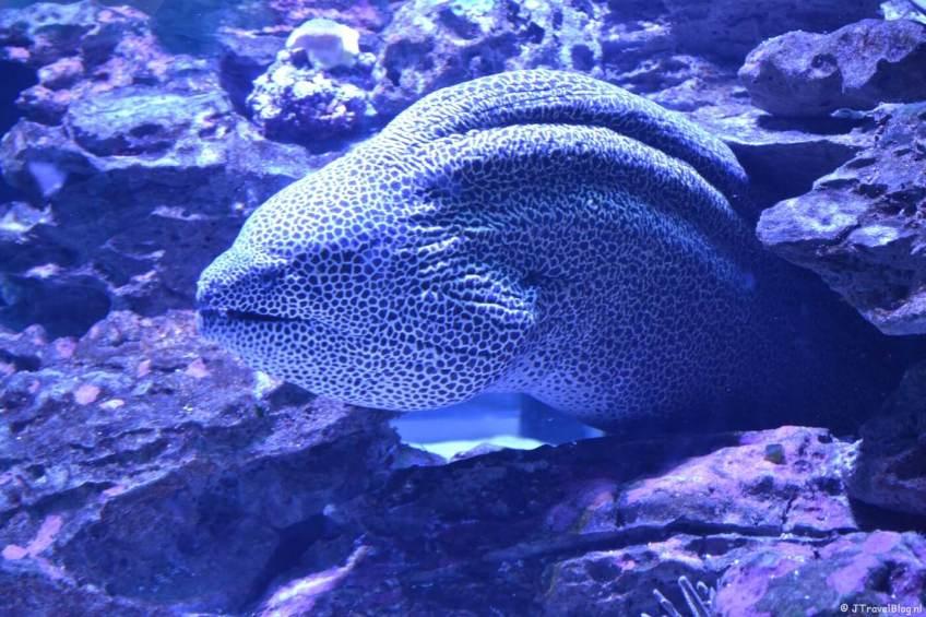 Two Oceans Aquarium in Kaapstad op dag 2 van mijn 22-daagse rondreis door Zuid-Afrika en Namibië