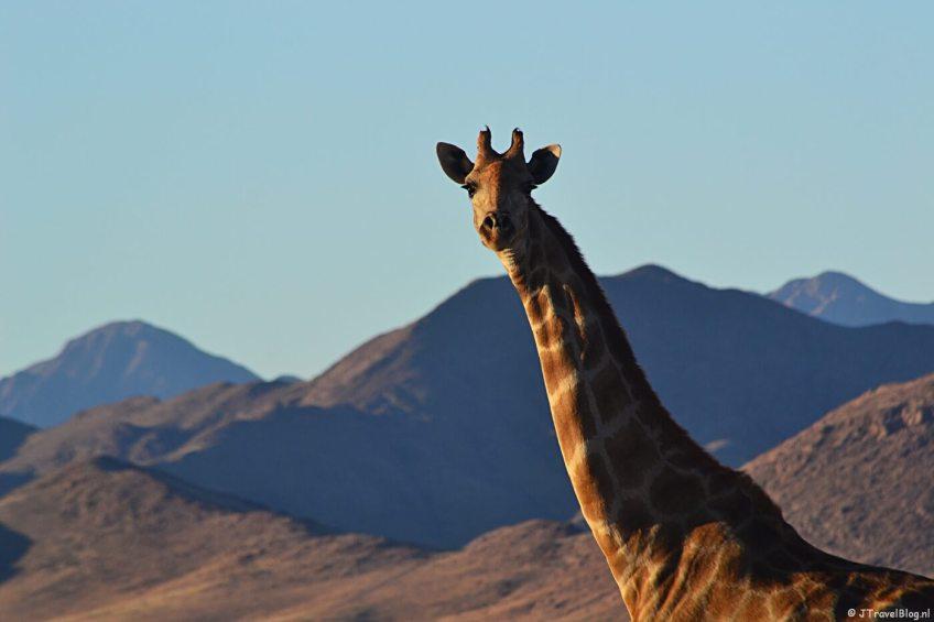 De Sundowner in de buurt van de Sossusvlei op dag 11 van mijn 22-daagse rondreis door Zuid-Afrika en Namibië