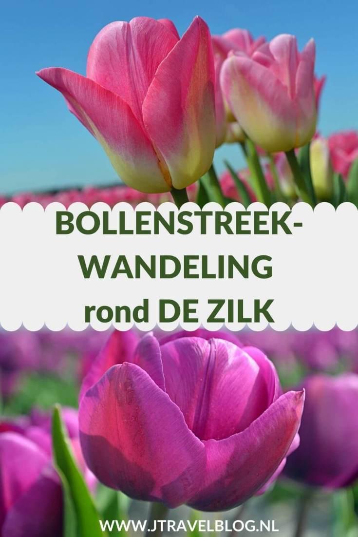 Ik maakte een Bollenstreekwandeling rond De Zilk in Zuid-Holland. Deze Bollenstreekwandeling gaat via verschillende knooppunten en langs veel bollenvelden. Wandel je mee? #bollenstreekwandeling #bollenstreek #dezilk #wandelen #jtravel #jtravelblog