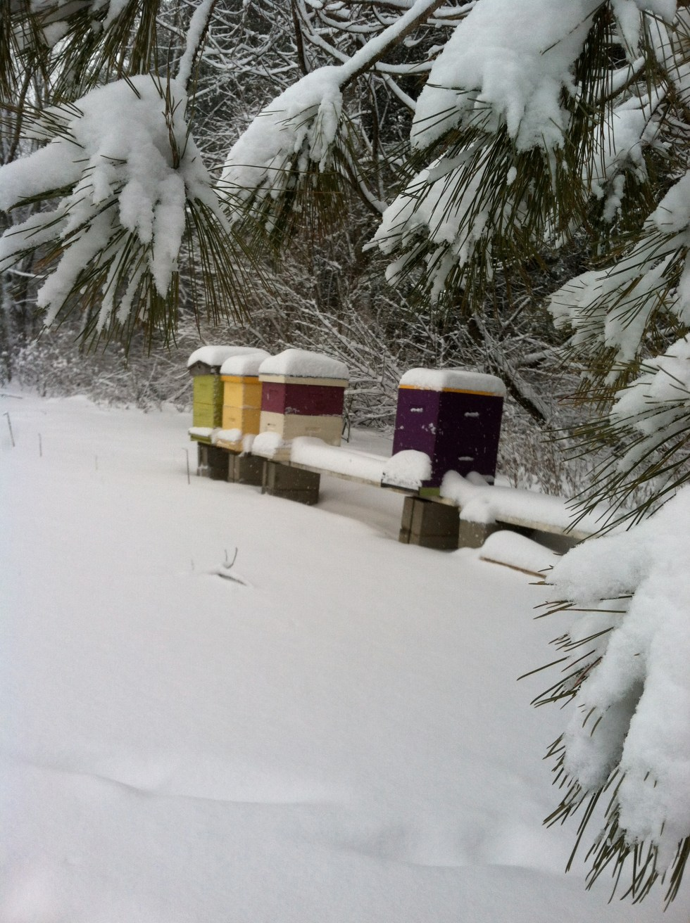 Life in a colorful box during a Vermont winter