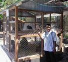 wpid img 20141103 111843 1 Ayam Mutiara Indukan dan Kalkun Jenis Bronze Koleksi Mas Fariq di Karanggeneng Lamongan Jual Ayam Hias HP : 08564 77 23 888 | BERKUALITAS DAN TERPERCAYA Ayam Mutiara Indukan dan Kalkun Jenis Bronze Koleksi Mas Fariq di Karanggeneng Lamongan Ayam Mutiara Indukan dan Kalkun Jenis Bronze Koleksi Mas Fariq di Karanggeneng Lamongan