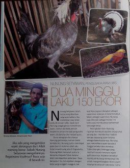 jualayamhias.com di liput majalah G priority