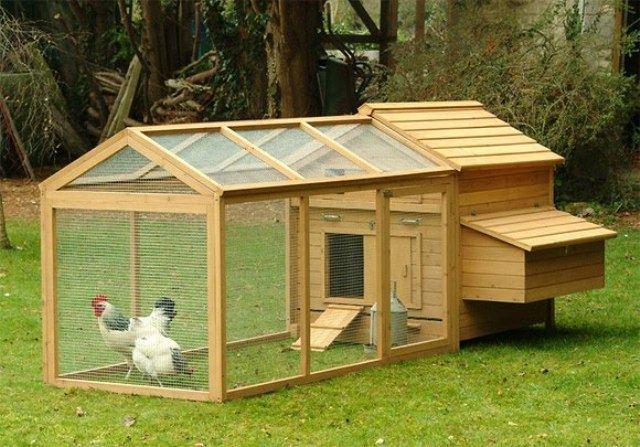 Ini sebenarnya kandang ayam brahma, namun Anda juga bisa menggunakan design kandang seperti itu untuk ayam kate Anda