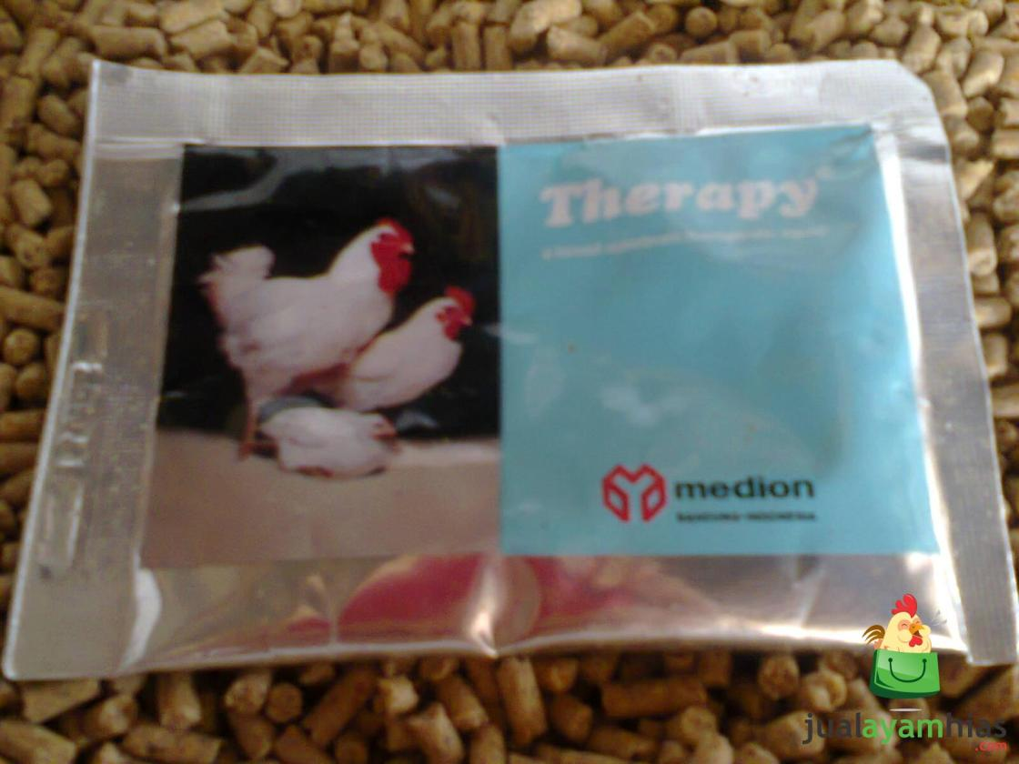 Obat Therapy menjadi salah satu solusi untuk menyembuhkan penyakit Berak Darah pada ternak ayam   Obat Therapy