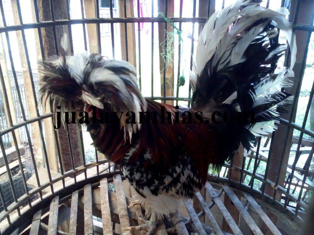 Beberapa Hal yang Perlu Anda Ketahui Sebelum Membeli Ayam