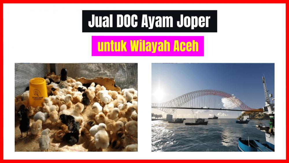 jual doc joper untuk wilayah Aceh bibit ayam kampung super Jual Ayam Hias HP : 08564 77 23 888 | BERKUALITAS DAN TERPERCAYA bibit ayam kampung super JualDOCatauBibitAyam KampungSuper(Joper)untuk DaerahAceh
