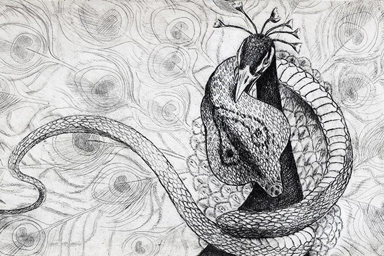 Peacock vs Snake