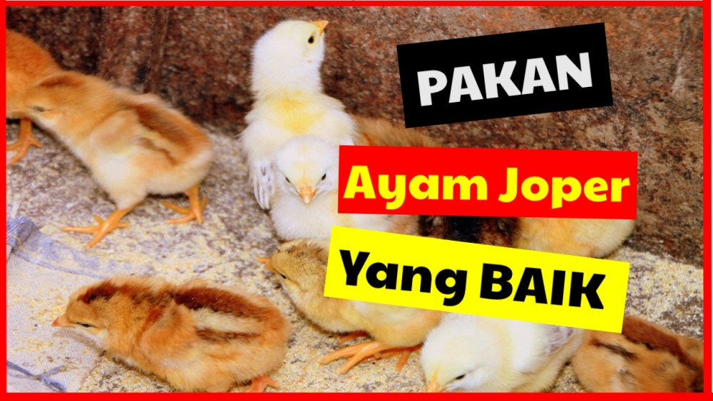 Pakan Ayam Joper