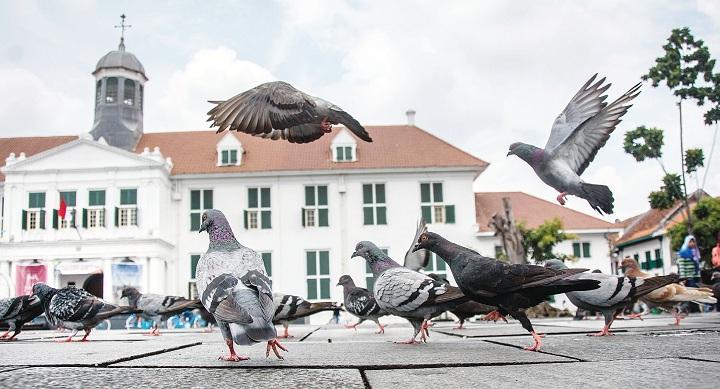 Burung Merpati di Museum Fatahilah