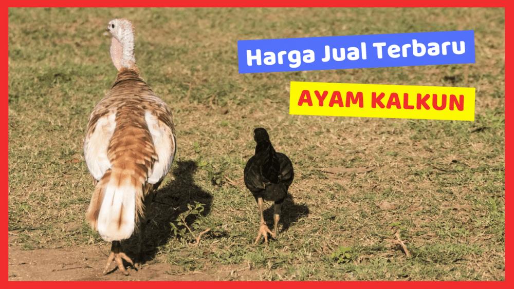 Harga Jual Ayam Kalkun Terbaru
