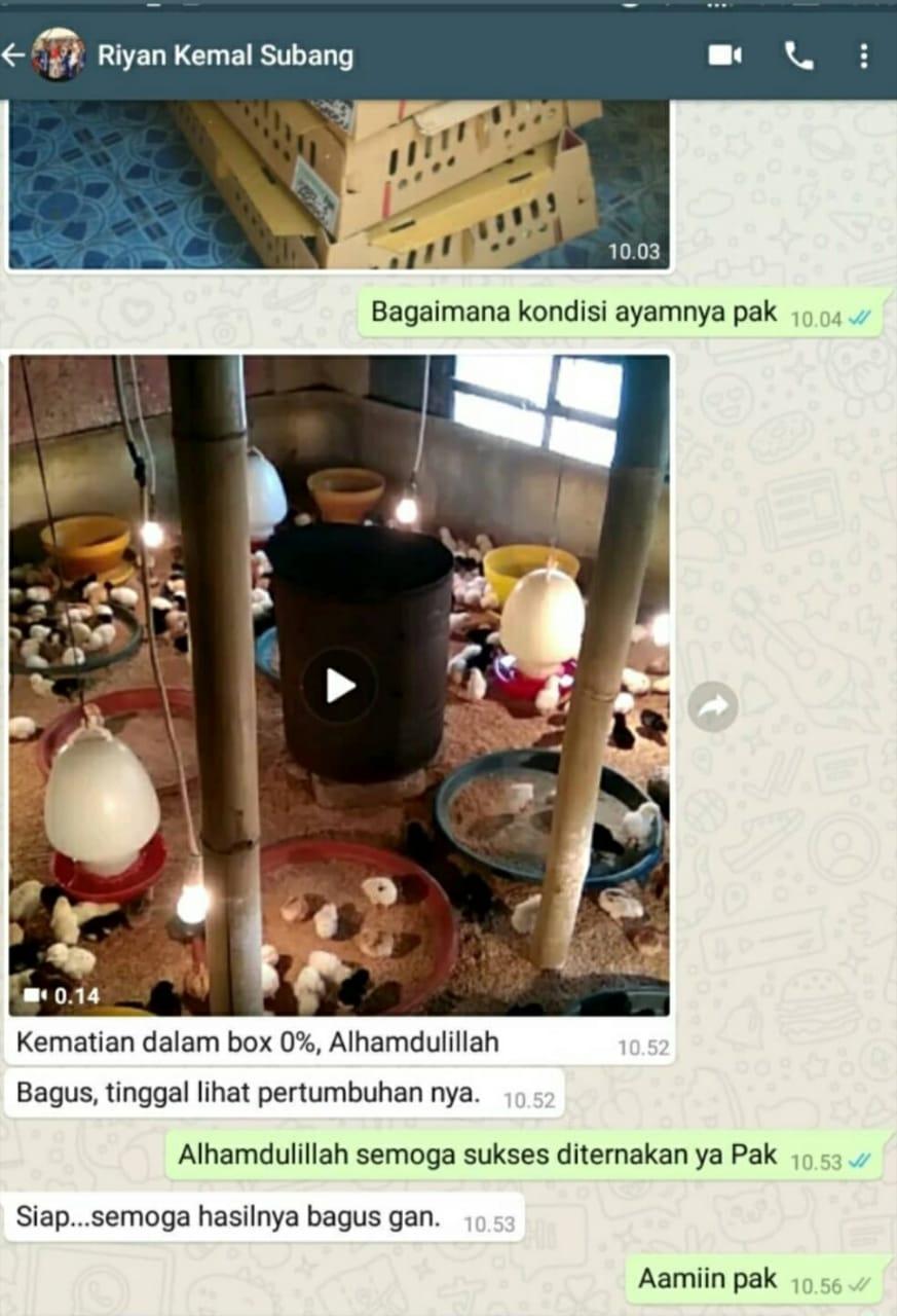 Testimoni Pak Riyan Subang Jual Ayam Hias HP : 08564 77 23 888 | BERKUALITAS DAN TERPERCAYA PROMO JOPER FIX