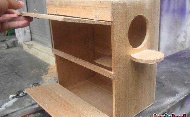 Tips Membuat Kotak Sarang Lovebird Jual Lovebird Cara