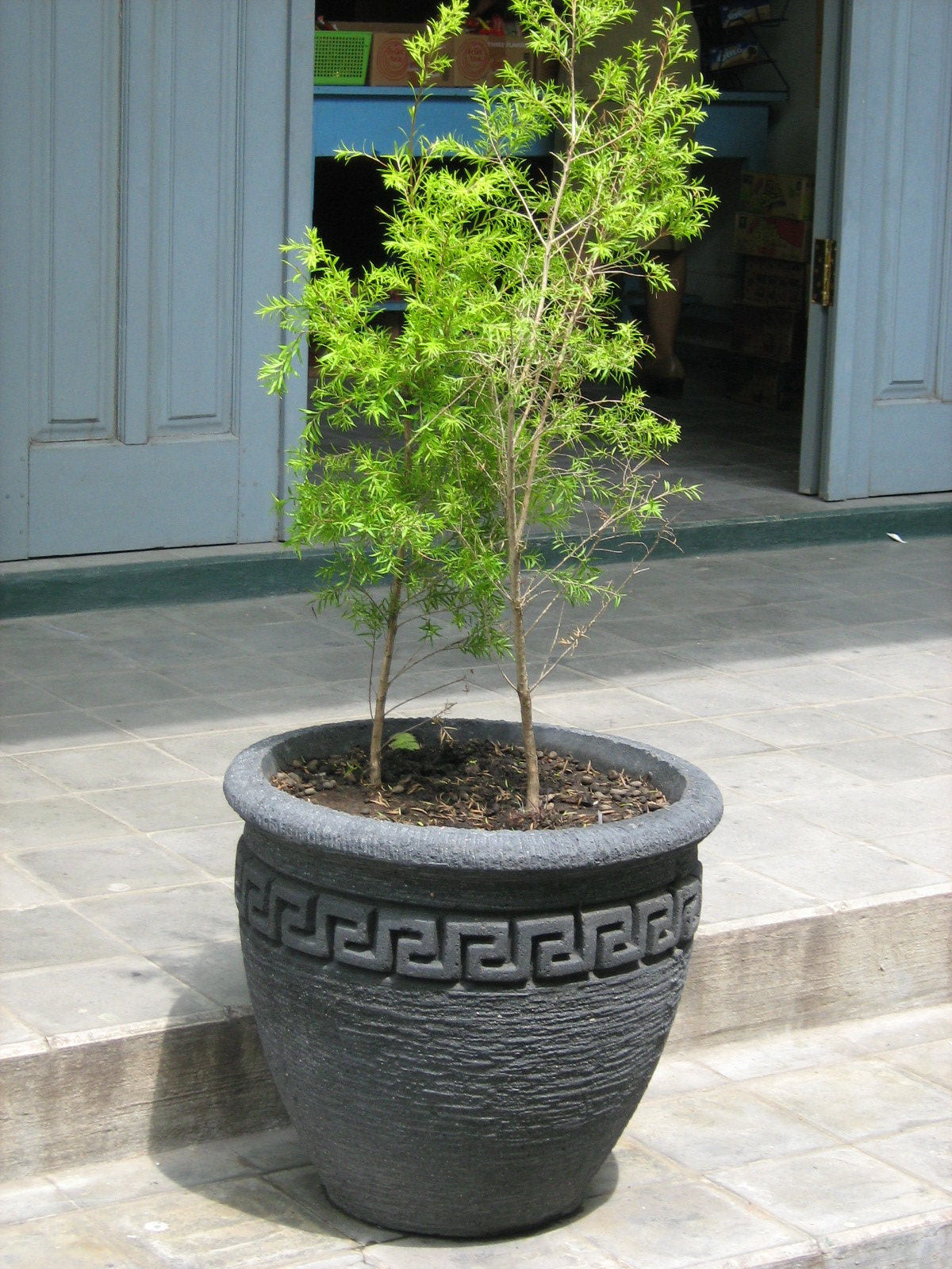 Pot Ukuran Sedang  jual pot  jual pot tanaman  jual pot
