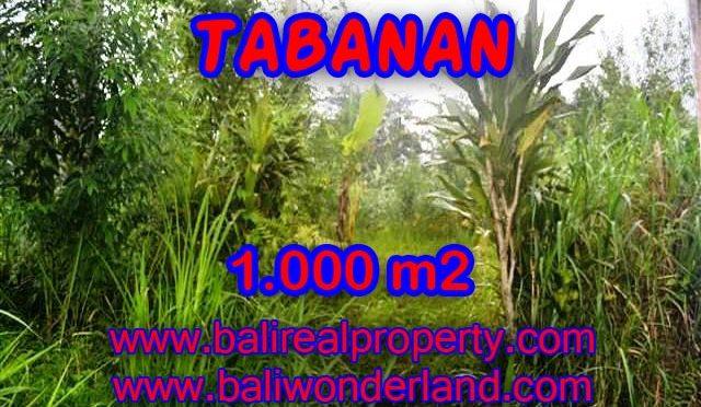 JUAL MURAH TANAH DI TABANAN BALI TJTB104 – PELUANG INVESTASI PROPERTY DI BALI