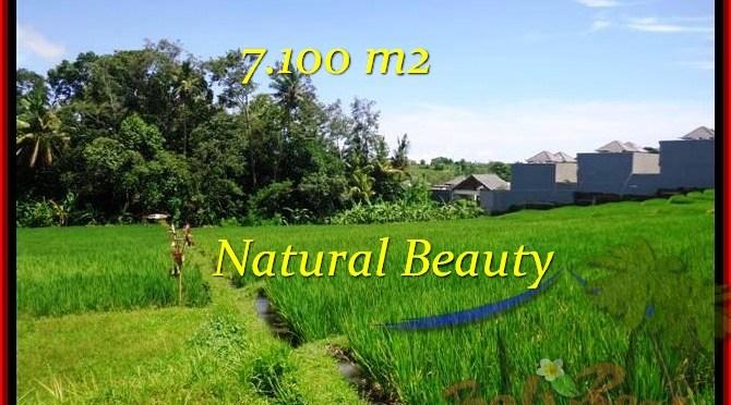 TANAH JUAL MURAH TABANAN BALI 7,100 m2 View sawah dan Sungai