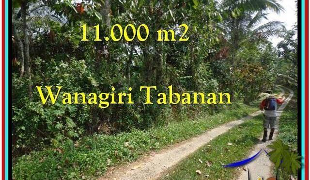 TANAH DIJUAL MURAH di TABANAN BALI Untuk INVESTASI TJTB213