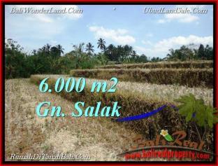 JUAL TANAH di TABANAN 6,000 m2 View Gunung, sawah