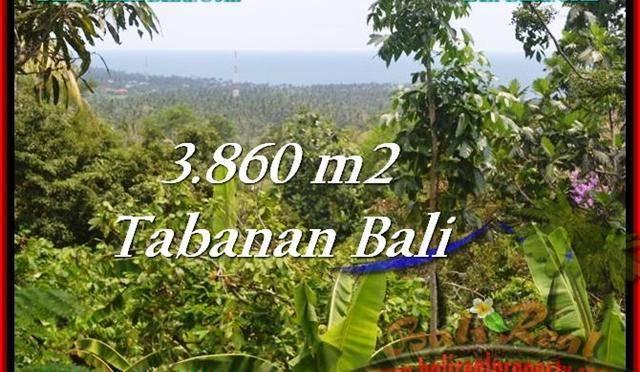TANAH di TABANAN BALI DIJUAL MURAH Untuk INVESTASI TJTB236
