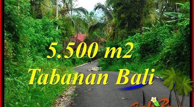 JUAL TANAH MURAH di TABANAN 5,500 m2 di Tabanan Penebel