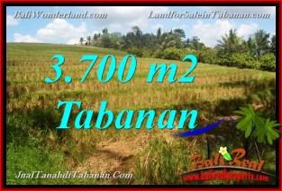 JUAL MURAH TANAH di TABANAN BALI 3,700 m2 View Sawah dan Sungai