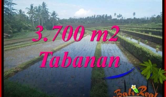 JUAL MURAH TANAH di TABANAN BALI 3,700 m2 VIEW LAUT DAN SAWAH