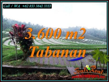JUAL TANAH MURAH di TABANAN 36 Are di SELEMADEG TABANAN